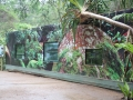 Outside of the Taudactylus container at Currumbin Sanctuary, Australia, showing the public viewing windows into the interior. Photo: Phil Bishop.