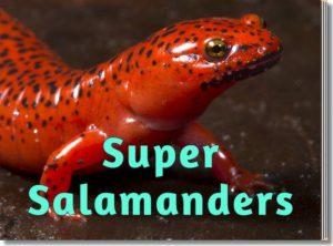 Super Salamanders