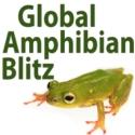 Global Amphibian Blitz. Find every one...