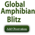 Global Amphibian Blitz - add an observation