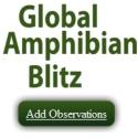 Global Amphibian Blitz - add an observation