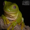 Join Amphibian Ark to help save amphibians