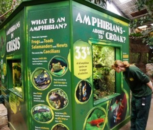 An amphibian display in the Tropical Realm at Chester Zoo.