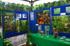 An informative booth that was decorated to mimic the natural forest environment and filled with live and preserved frog specimens was set up at Zoo Negara for Leap Day.