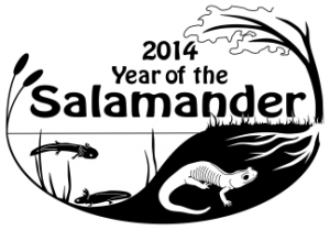 Year of the Salamander