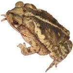 Amphibians as Pets