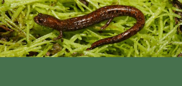 salamander-slider