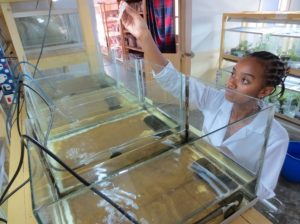Raising Boophis tadpoles at Association Mitsinjo