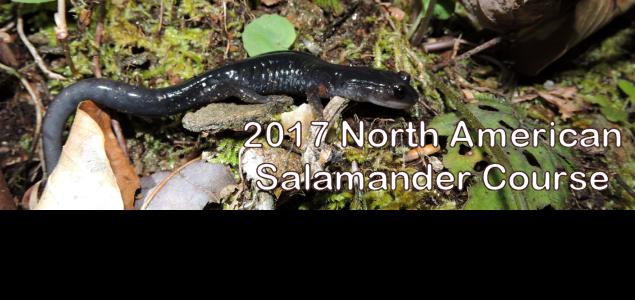 2017-salamander-course-en