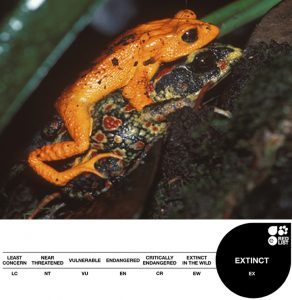 Golden Toad, Extinct